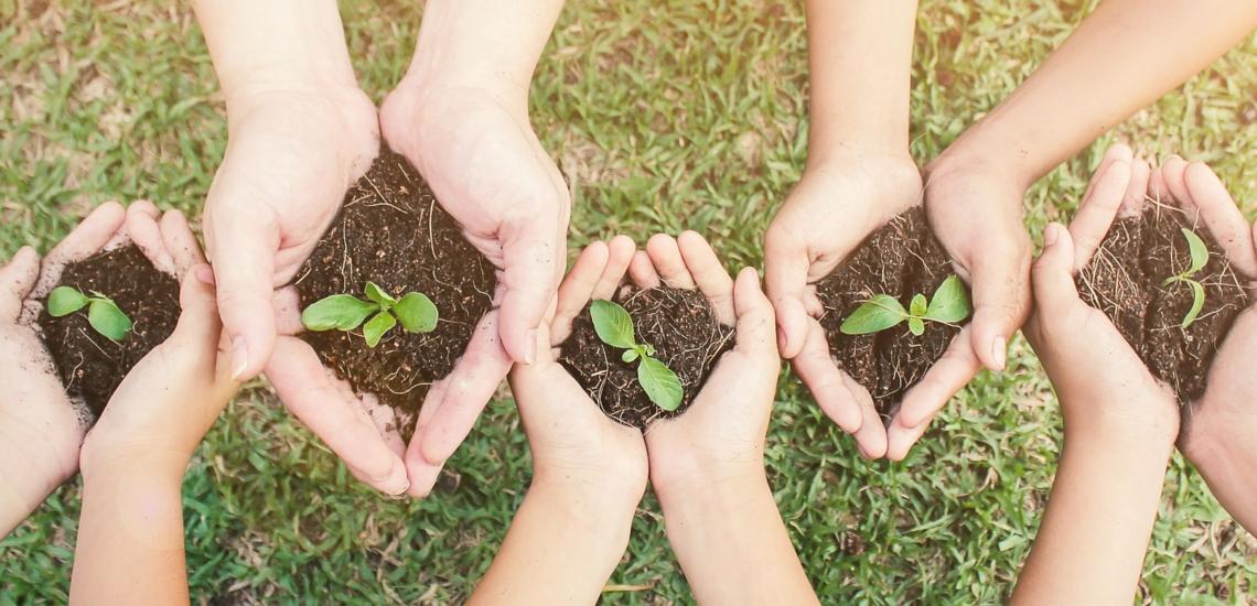 Kinderhände mit Erde und Pflänzchen